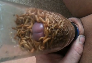 worms and slugs Eat Cock