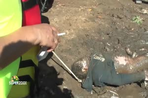Dead Guy With Huge Boner